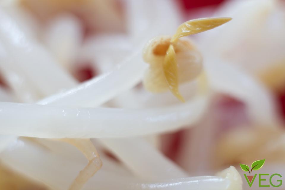 germogli-di-soia