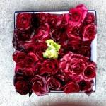rosa-di-gorizia