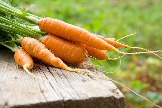 carote-1