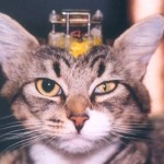 cat-with-electrode