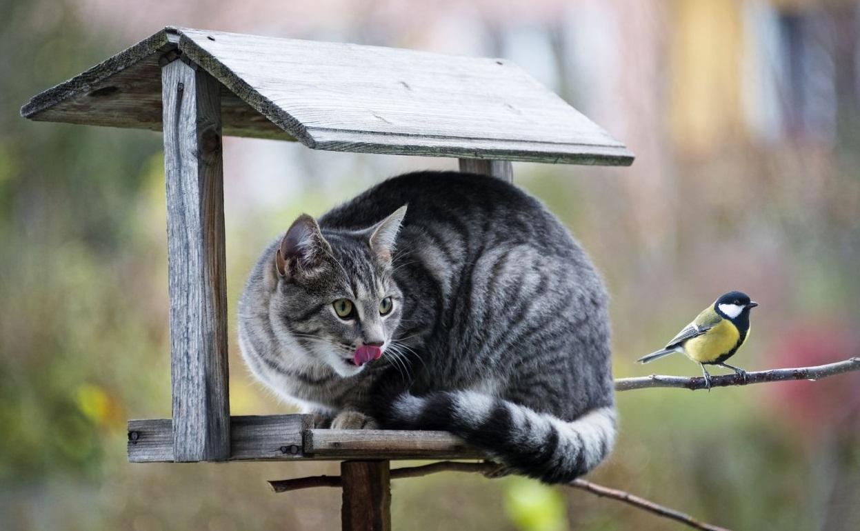 gatto e uccello